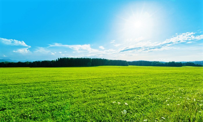 Green Field Landscape near Forest, blue Sky